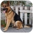 Photo 1 - German Shepherd Dog Dog for adoption in Los Angeles, California - Rolf von Ritterhaus
