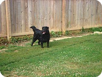 Australian Shepherd Mix Dog for adoption in Irvington, Kentucky - Kaydee