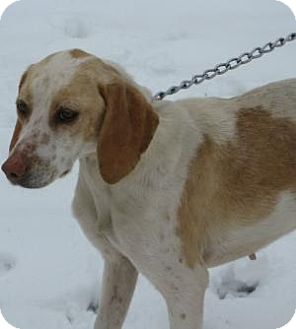 Foxhound Mix Dog for adoption in Mineral, Virginia - Lexi