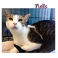 Domestic Mediumhair Cat for adoption in Huntington, New York - Nells