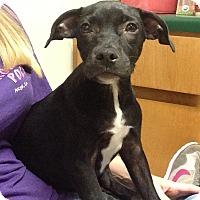 Adopt A Pet :: Maryanne - Marshfield, MA