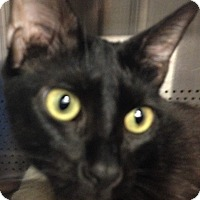 Adopt A Pet :: Fidget - Sarasota, FL
