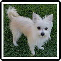 Adopt A Pet :: BANGS - Winchester, CA