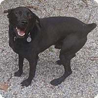 Adopt A Pet :: Bobby - Bryson City, NC