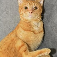 Adopt A Pet :: Iggy - Neenah, WI