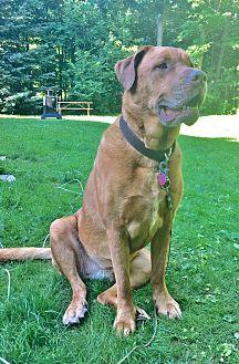 Dogue de Bordeaux Mix Dog for adoption in Rigaud, Quebec - Zoe