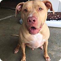 Adopt A Pet :: Sylis - Brunswick, OH