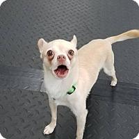 Adopt A Pet :: Meech - Plainfield, IL