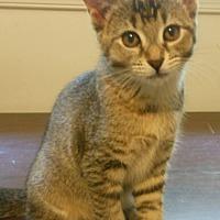 Adopt A Pet :: Poppy - Reston, VA