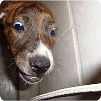 Adopt A Pet :: Sasha & Fletcher - Winter Haven, FL