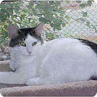 Adopt A Pet :: Bradley & Brianna - Quincy, MA