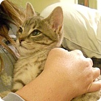 Adopt A Pet :: Kirby - Sterling Hgts, MI