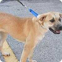 Adopt A Pet :: Jazzy - Toledo, OH