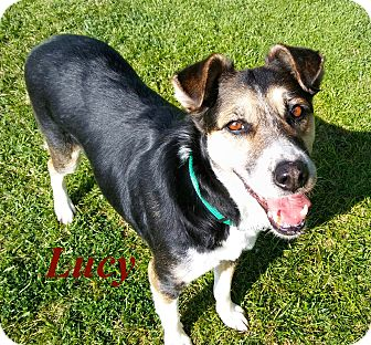 Hound (Unknown Type)/Cattle Dog Mix Dog for adoption in El Cajon, California - Lucy