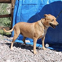 Adopt A Pet :: Cayenne - Golden Valley, AZ