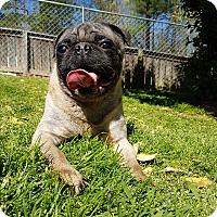 Adopt A Pet :: Bashful - Crump, TN