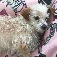 Adopt A Pet :: Myles - beverly hills, CA