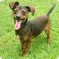 Adopt A Pet :: Dez - Tyler, TX