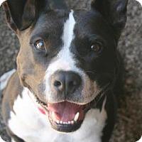 Adopt A Pet :: Gauge - Norfolk, VA