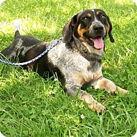 Adopt A Pet :: Jake - Sweetwater, TN