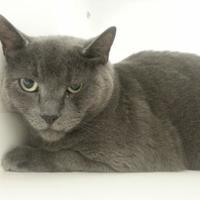 Adopt A Pet :: Marley - Buellton, CA