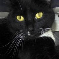 Adopt A Pet :: Sassy - Potsdam, NY
