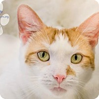 Adopt A Pet :: SONCHEE - Toledo, OH