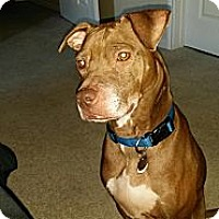 Adopt A Pet :: Rusty - Kaufman, TX