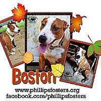 Adopt A Pet :: Boston - Colleyville, TX