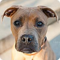 Adopt A Pet :: Rocky - Reisterstown, MD