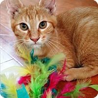 Adopt A Pet :: Sherbert - Orange, CA