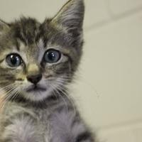 Adopt A Pet :: Waffle - Cleveland, AL