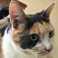 Adopt A Pet :: Missy - Auburn, CA