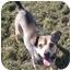 Photo 1 - Shepherd (Unknown Type) Mix Dog for adoption in Phoenix, Oregon - Shep