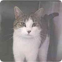 Adopt A Pet :: Danielle - Lunenburg, MA