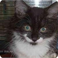 Adopt A Pet :: Pogo - Markham, ON