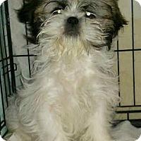 Adopt A Pet :: Winchel - House Springs, MO