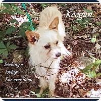 Adopt A Pet :: Keegan-ADOPTION Pending - Franklinton, NC