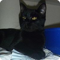 Adopt A Pet :: Marie - Hamburg, NY