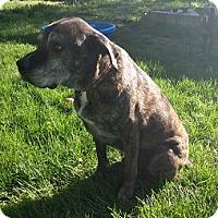Adopt A Pet :: Scooby *Pending* - Logan, UT