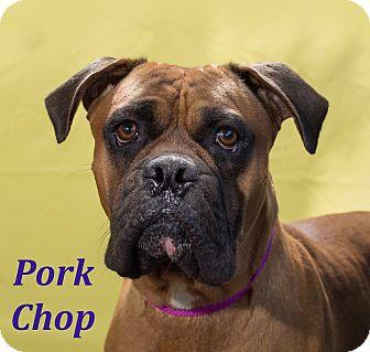 Boxer Mix Dog for adoption in El Cajon, California - Pork Chop