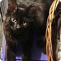 Adopt A Pet :: Huron - St. Louis, MO
