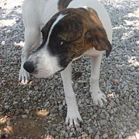 Adopt A Pet :: Jack - Batesville, AR
