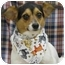 Photo 1 - Jack Russell Terrier Mix Dog for adoption in Newland, North Carolina - Rascal