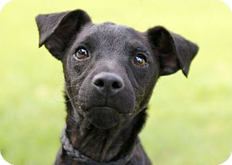 Terrier (Unknown Type, Small) Mix Dog for adoption in Austin, Texas - Twitter