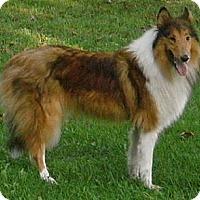 Adopt A Pet :: Poochie - Minneapolis, MN