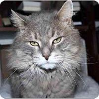 Adopt A Pet :: Leo - Markham, ON