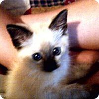 Adopt A Pet :: Sara - Saint Albans, WV