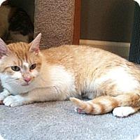 Adopt A Pet :: Patience - Monroe, GA