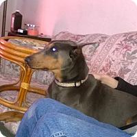 Adopt A Pet :: Millie - Allegan, MI